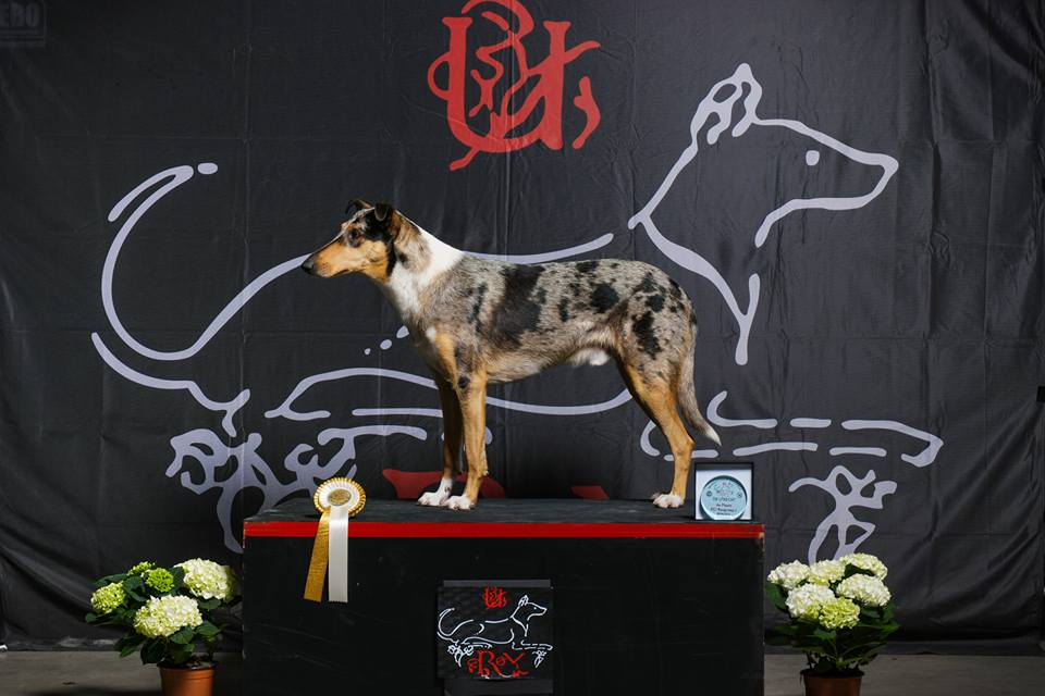 Utrecht Dogshow NL 2016